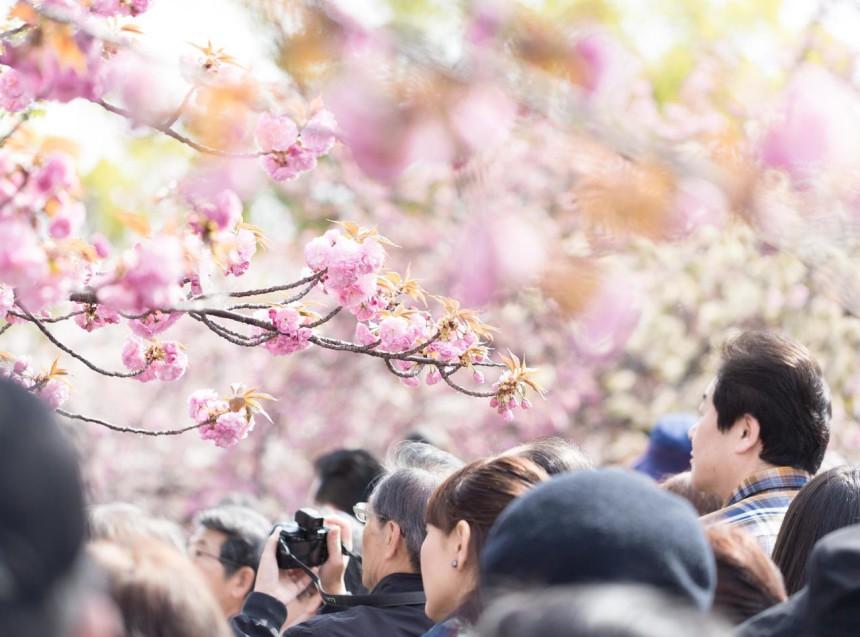 レジット!!花見により活動停止のお知らせ 4月1日(金)