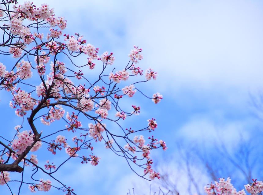 お花見当日の天気